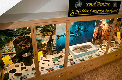Fossil Wonders: A Hidden Collection Awakened exhibition at Doncaster Museum (June, 2015).